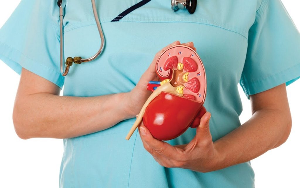 Как свои почки сделать здоровыми