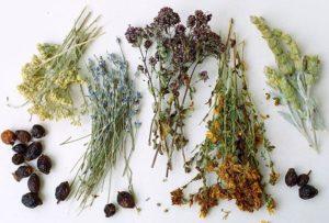 травы при цистите