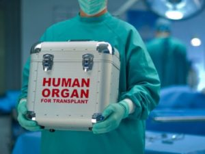 Врач держи холодильник с органом