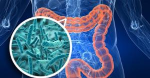 рисунок бактерий дисбактериоза