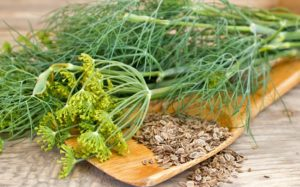 Семена и веточки укропа