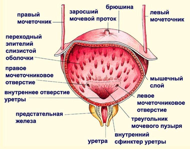 Спазм после мочеиспускания 1
