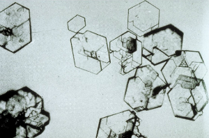 кристаллы соли в моче