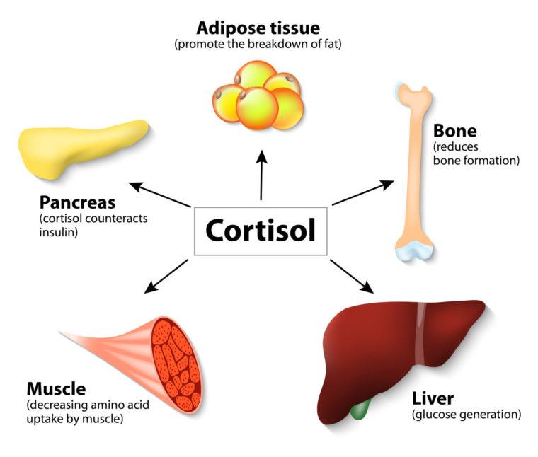 Суточная моча на кортизол как собирать 1