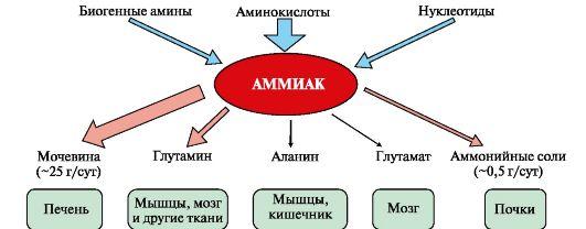 схема образования аммиака