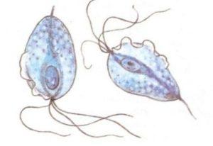 бактерии трихомоноза