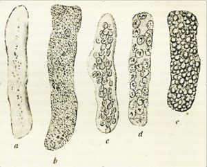 рисунок цилиндров в моче