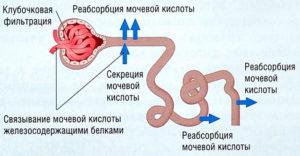 вывод мочевой кислоты