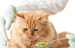 кот пьет таблетку