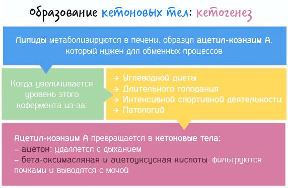 схема образования кетоновых тел
