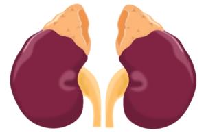 Надпочечники - симптомы заболеваний у женщин и мужчин, их лечение