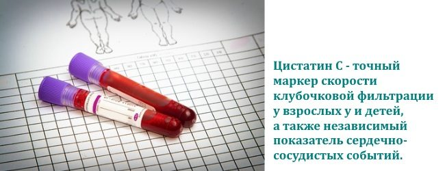 цистатин С