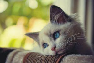 кот грустит