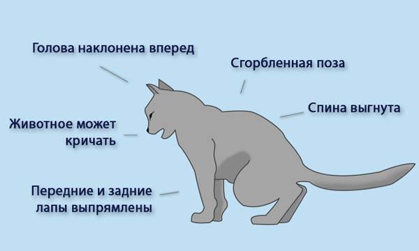 Симптомы хпн у кошек